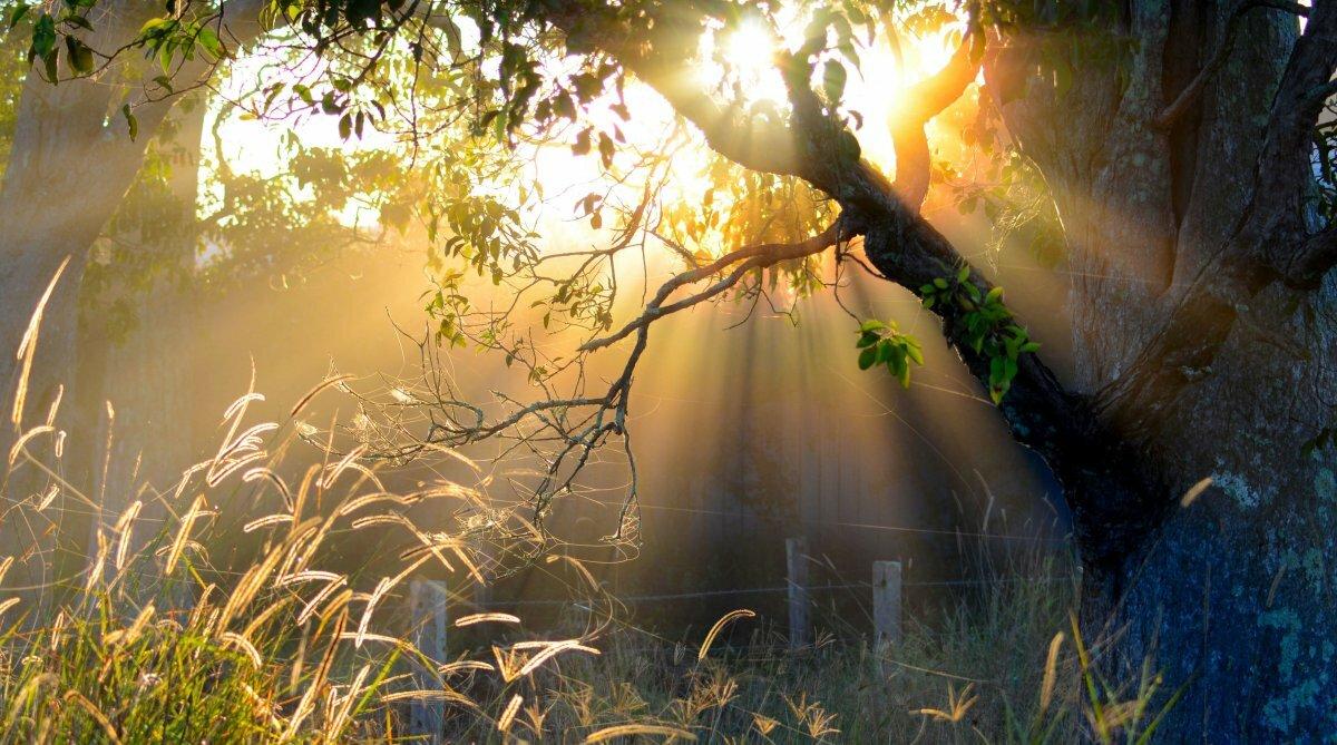 Таинственное утро картинки
