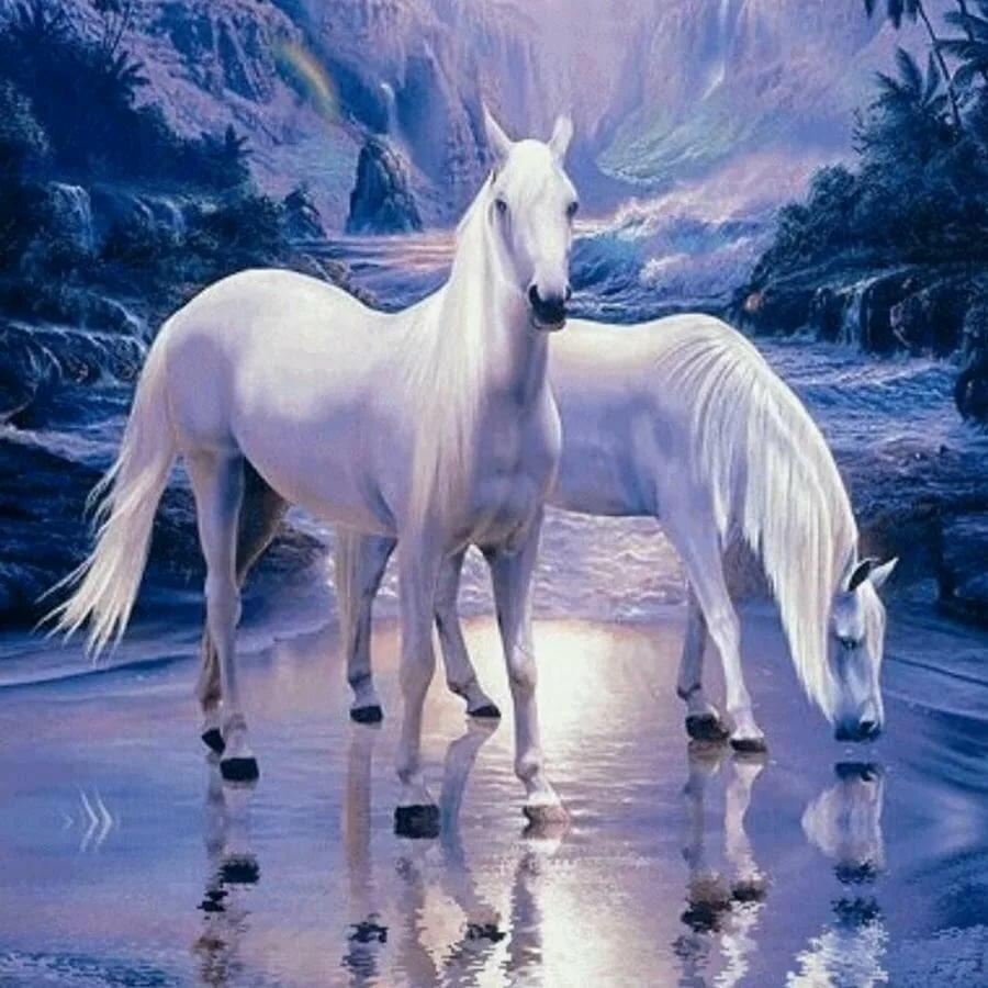 живые картинки которые двигаются животные лошади этот