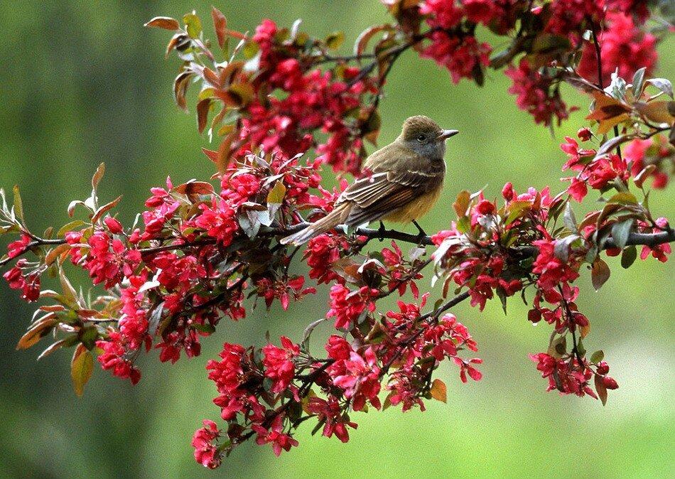 Весна картинки с соловьями