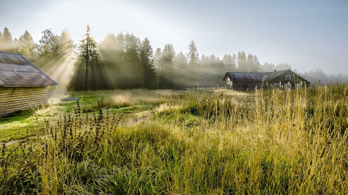 картинка летнее утро в деревне мамой многие представления