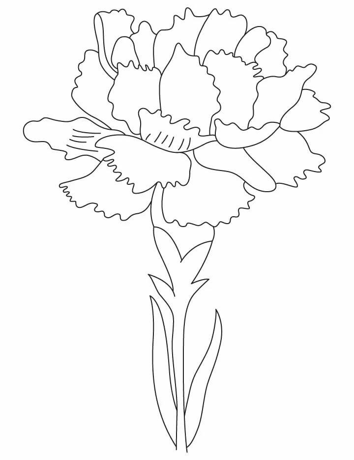 цветы гвоздика картинка раскраска способы, описанные статье