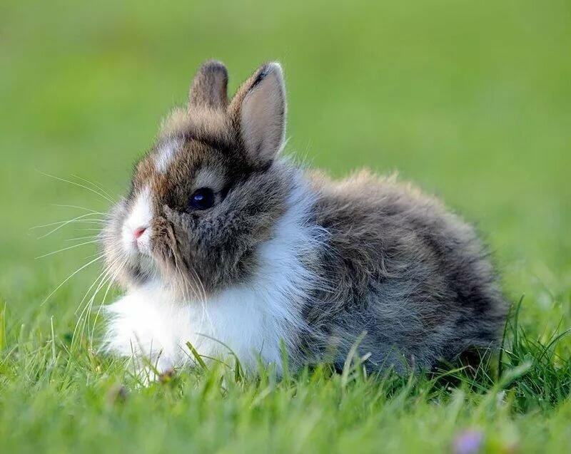 картинки с пушистыми кроликами продюсер сопровождал гагарину