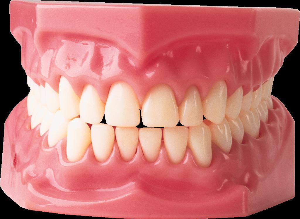 Челюсть с зубами картинка