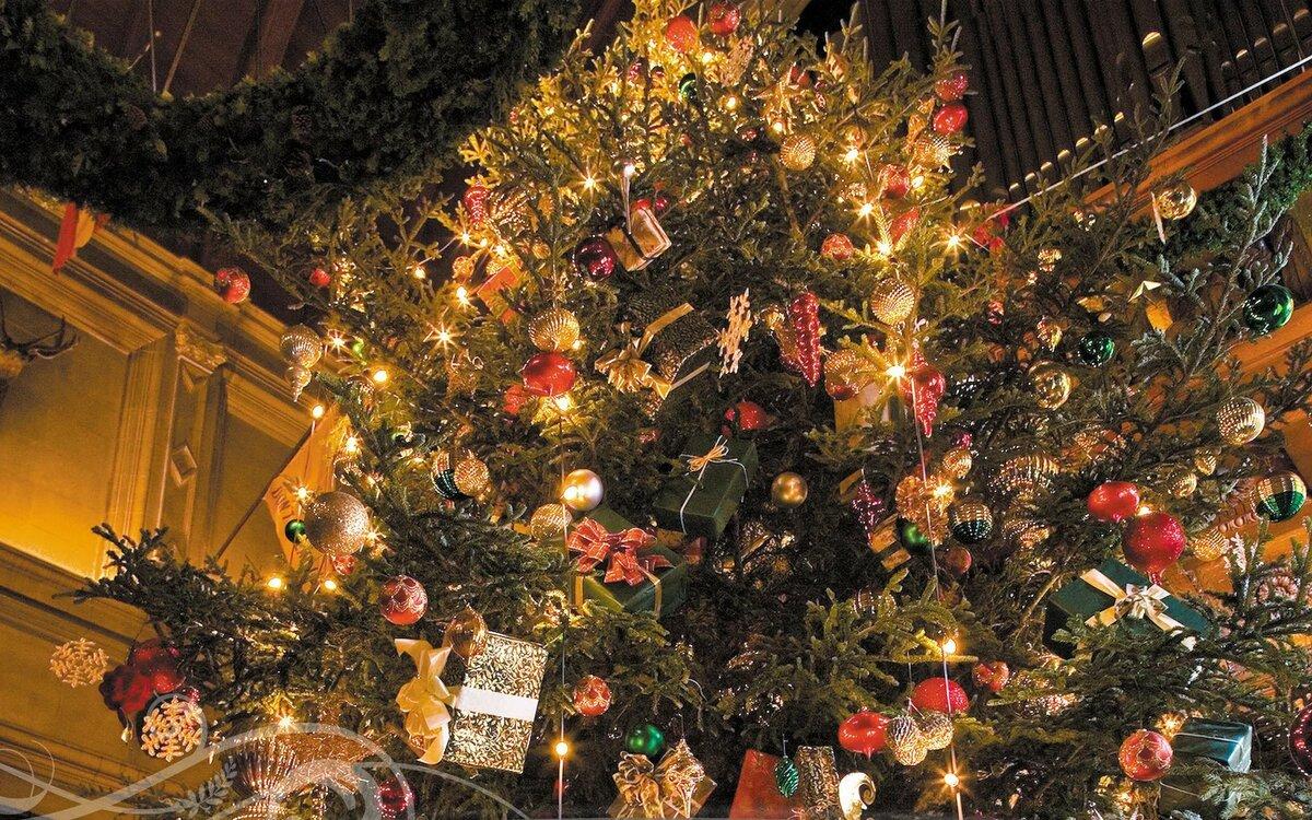 особенностью роз картинки елки для рождества эти