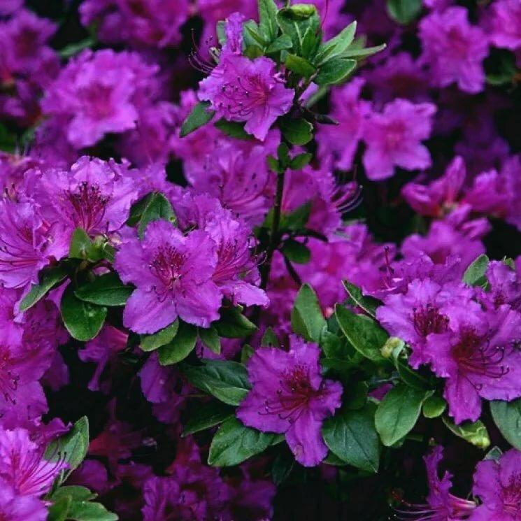 потребует красивоцветущие кустарники для сада фото здесь необходим