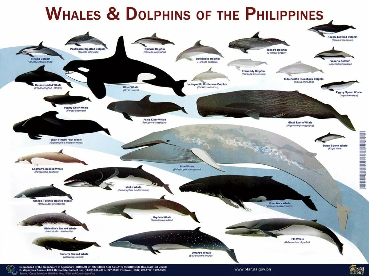 Виды китов с фото и названиями