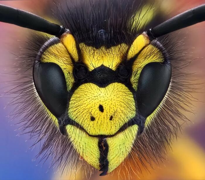 Картинки прикольные животных и насекомых
