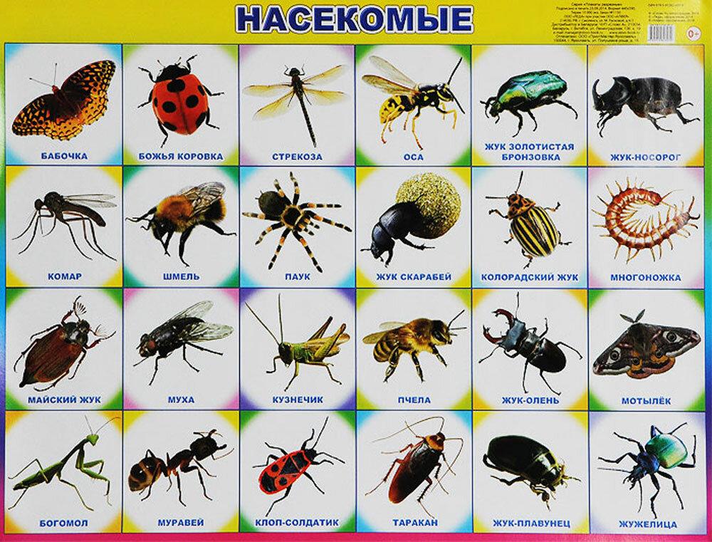 все о насекомых с картинками