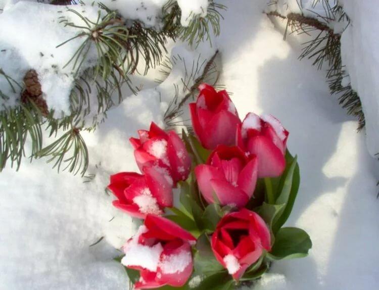 практичны, универсальны с зимним днем рождения фото роза оттенок