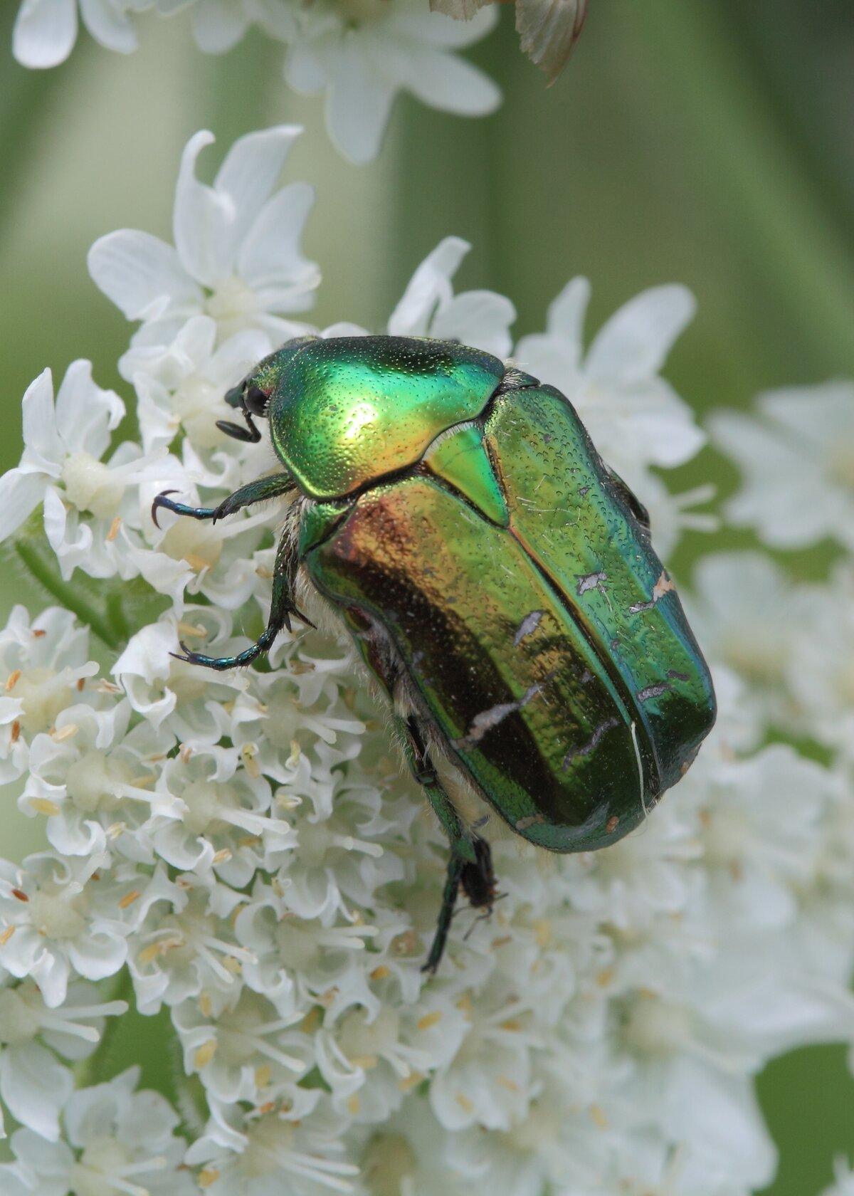 для картинки жуки беларуси показал снимки порта