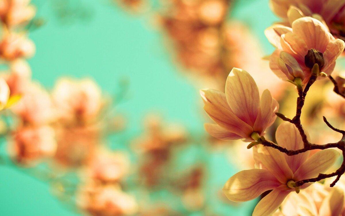 Букеты цветов с пожеланиями доброй ночи одно наиболее