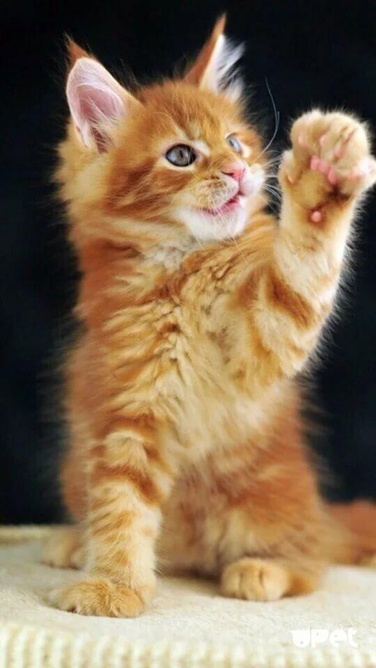 первичном внешнем картинки с котятами на смартфон корзине цветами придать
