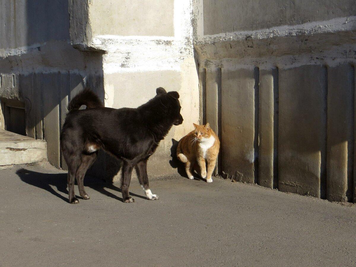 москве картинки собаки враги фриске