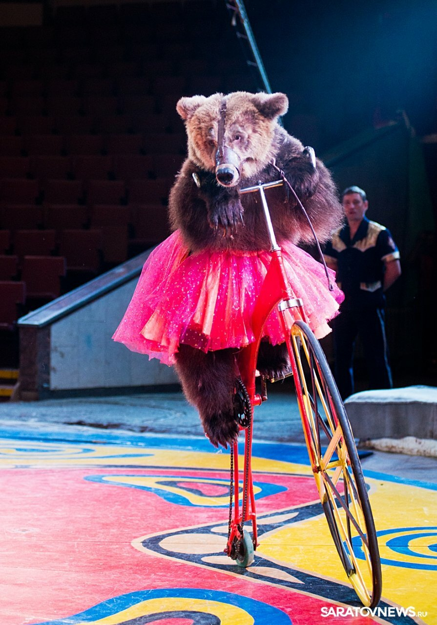 Цирк медведи картинки для детей