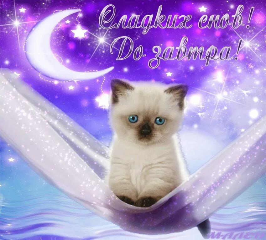 Доброй ночи с котятами картинки