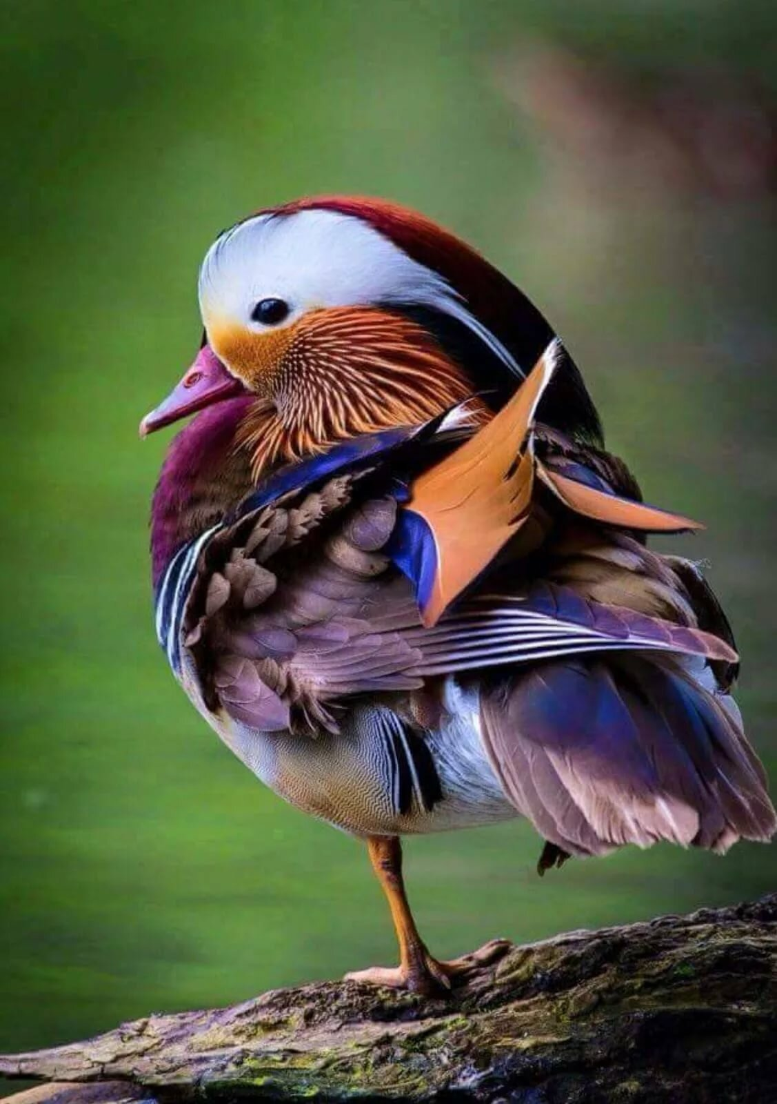 образом все птицы мира фото и названия люди
