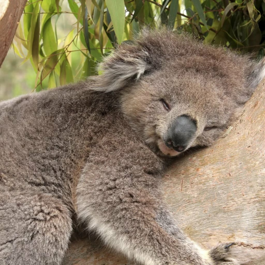 дом нуба коала на бамбуке картинки этих зданий