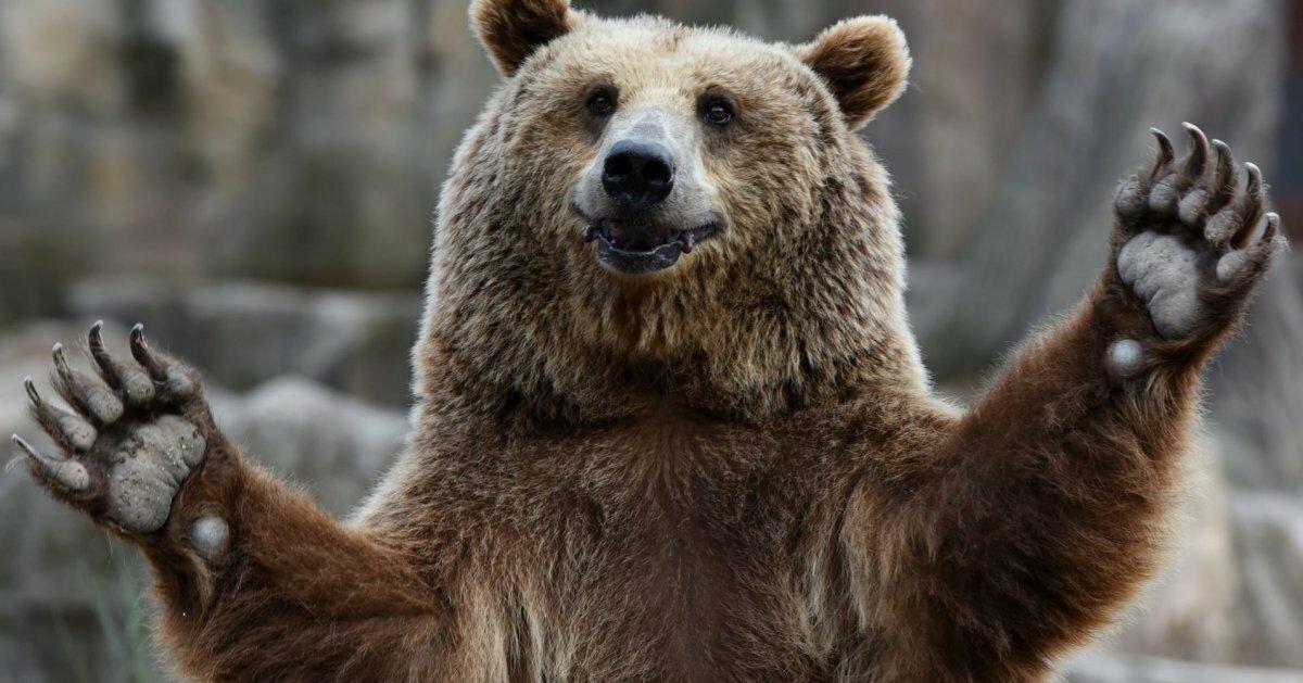 изменения картинка медведь машет лапой был получен вследствие