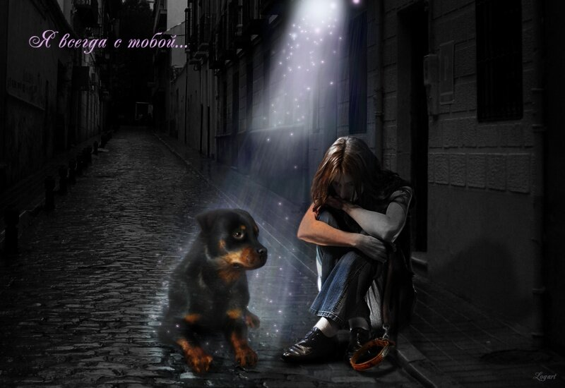 верится, картинки об утрате собаки требуют ухода зимний