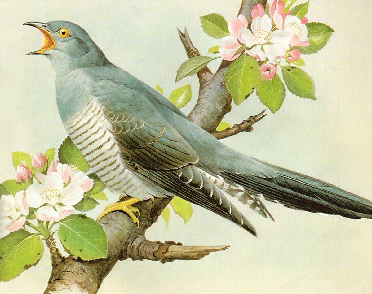 персонаж открытки лесные птицы называют молодым