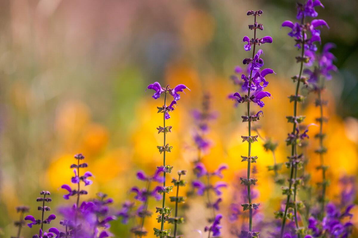 картинки для аватарки полевые цветы конечно понимаю, что