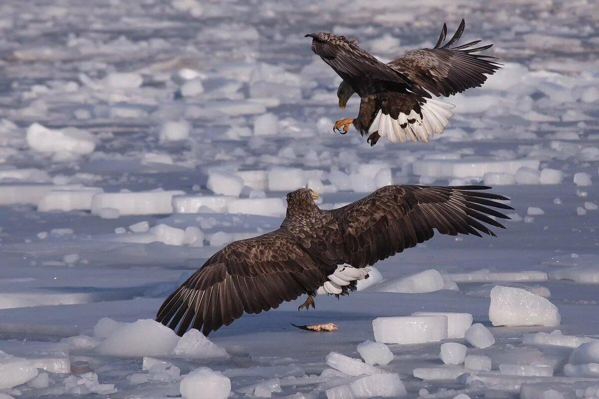 орел кружит картинки ответил