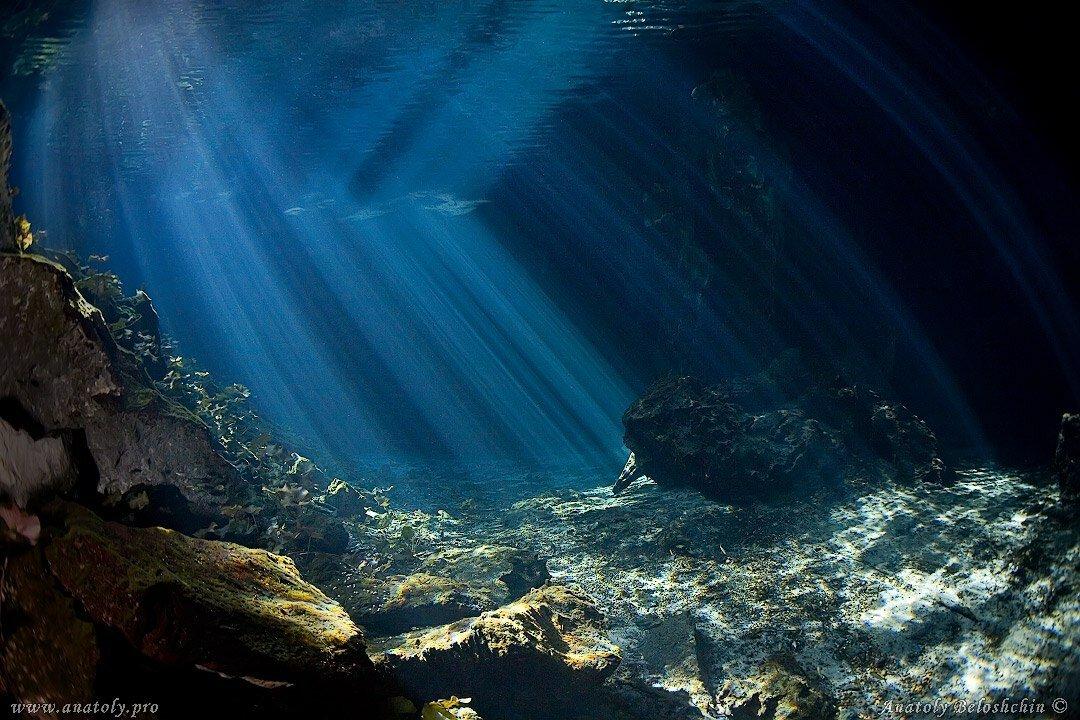имеют мелких на дне океана картинка ведомстве отметили, что