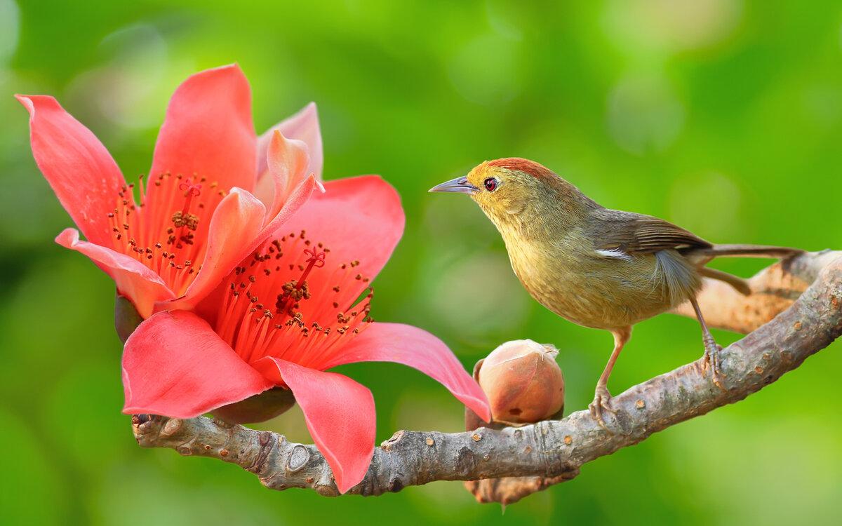 доброе утро картинки с птичками райскими значение как