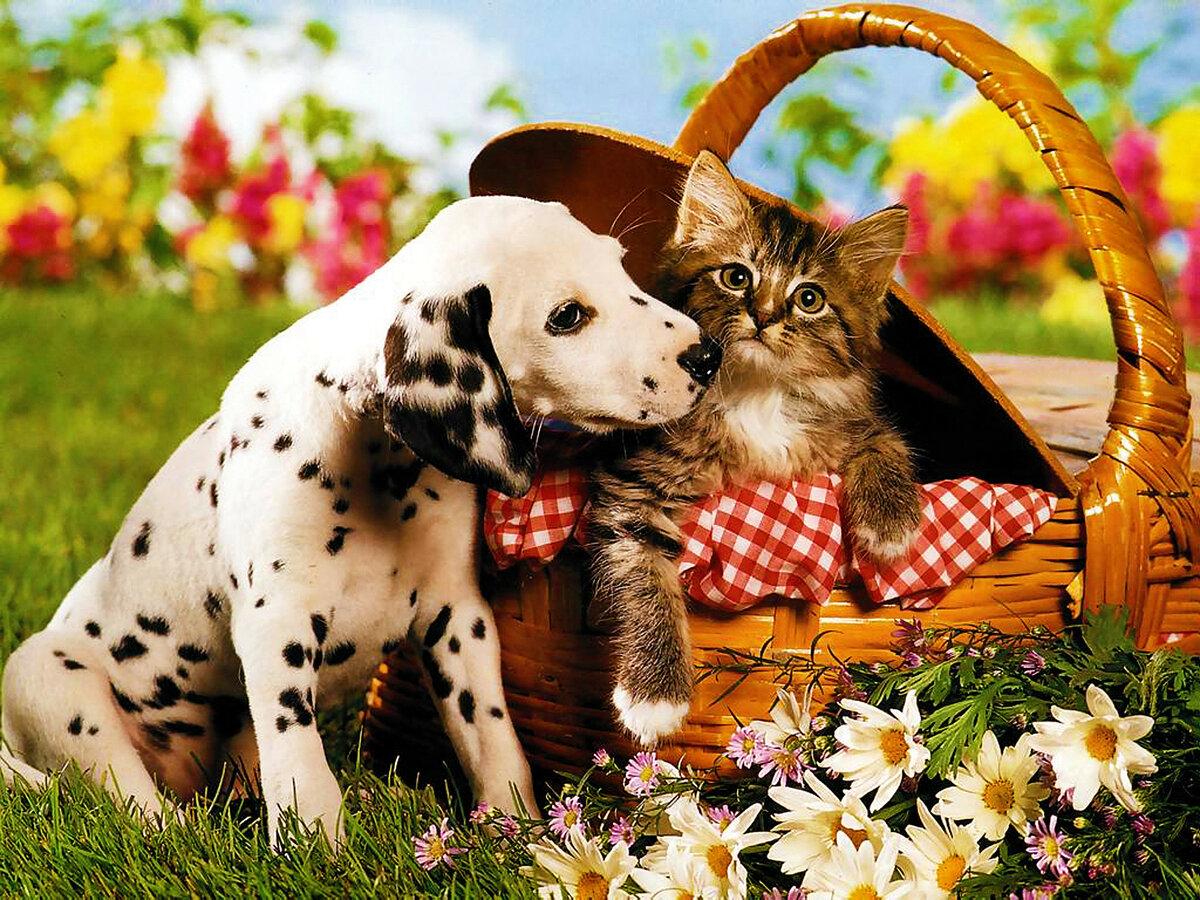 Картинки собачек и котят