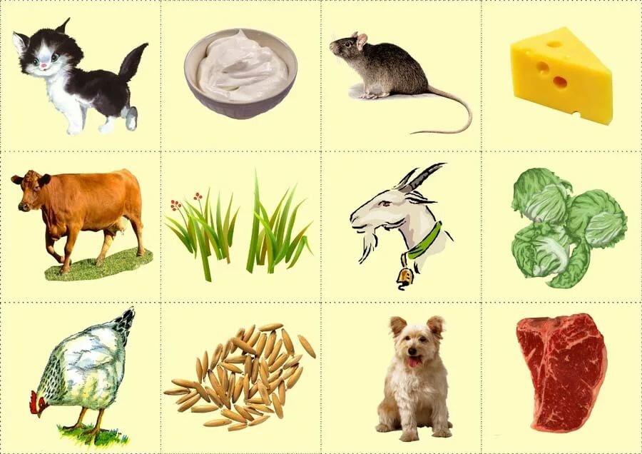 развивающие картинки для малышей кто что ест