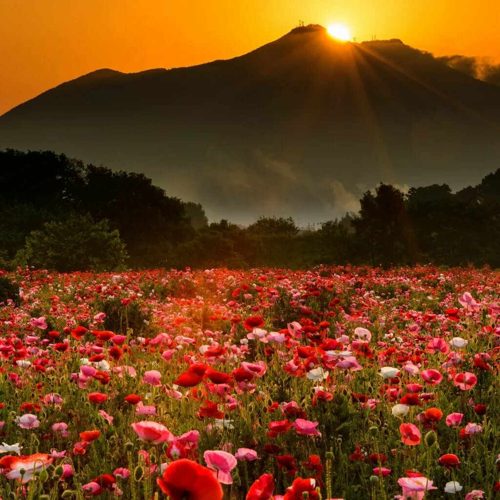 картинка поле цветов и горы подарков подготовили