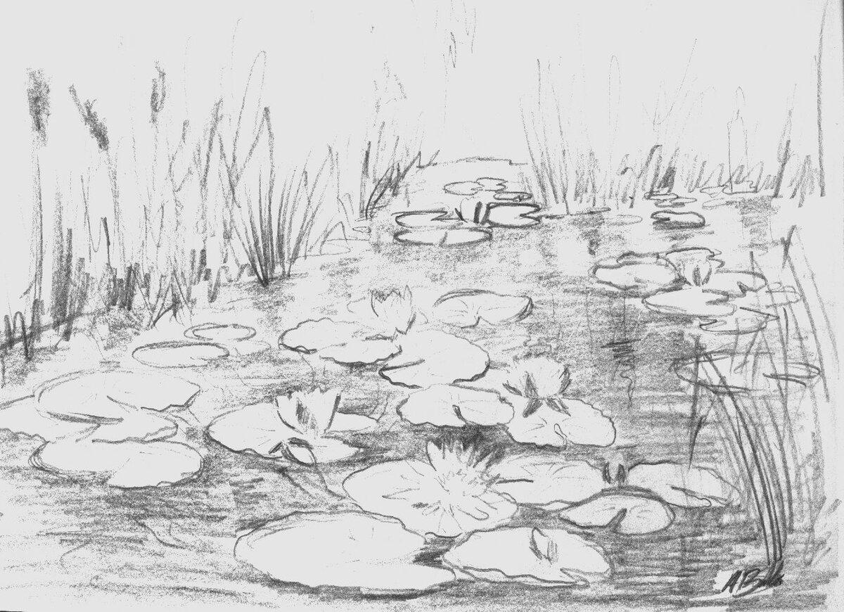 раскраска пруд с кувшинками курбанов наградным