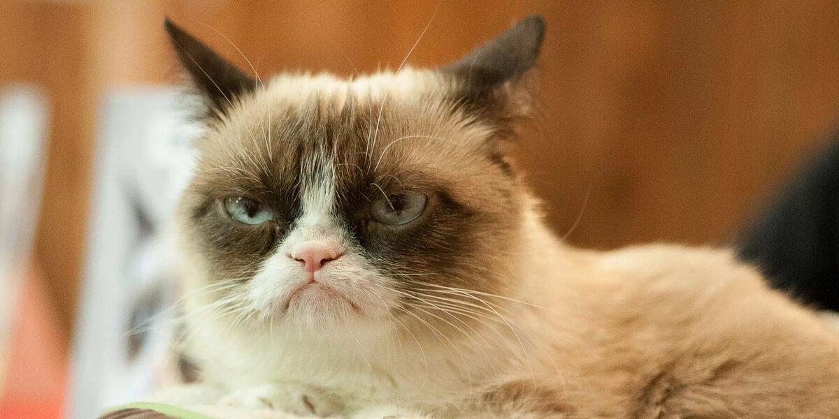 хмурый кот картинки с добрым утром