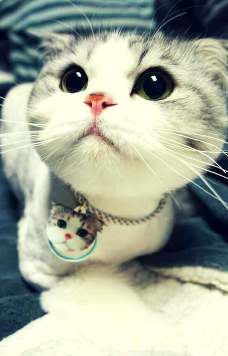 Самые няшные картинки с котятами