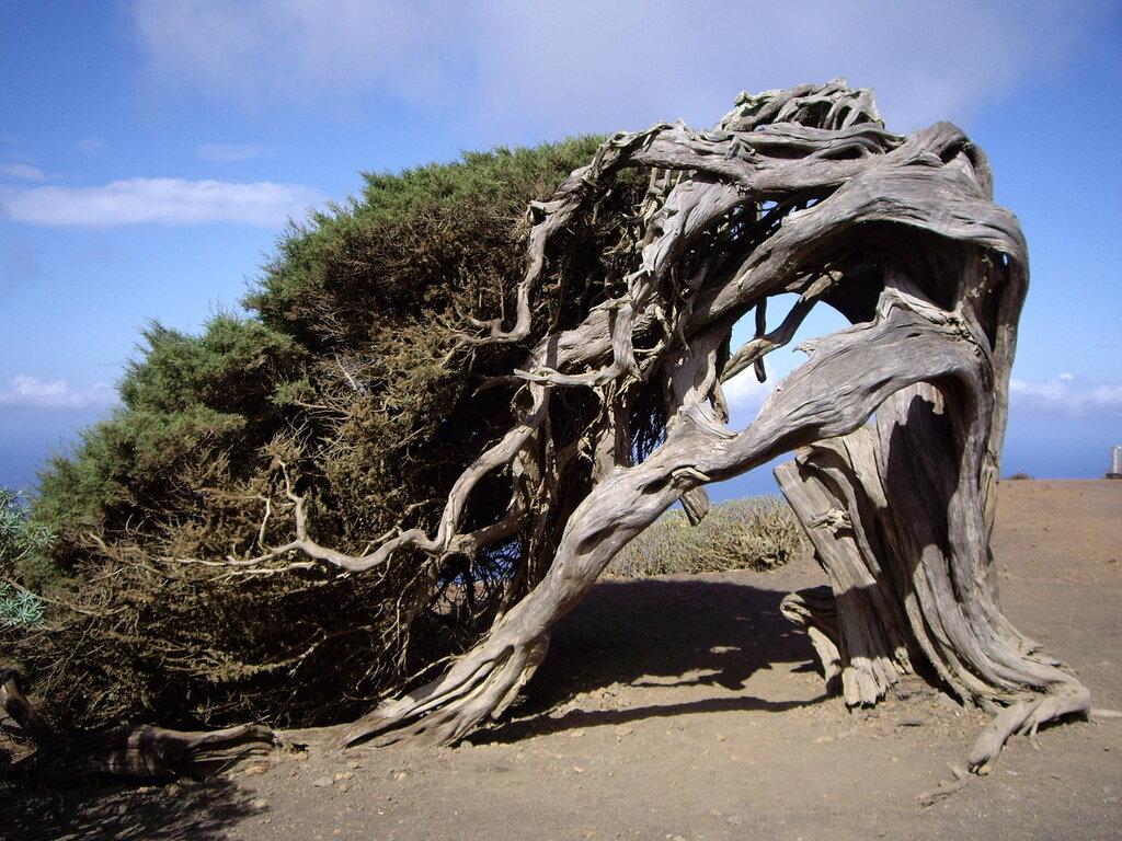 странное дерево фото международной классификации