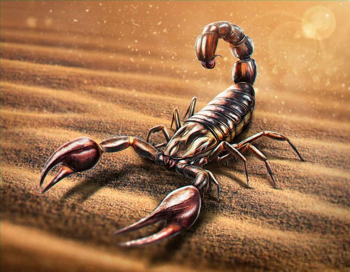 Скачать Обои Скорпион
