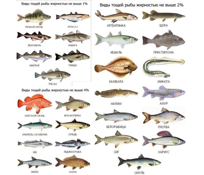 Диета При Подагре Рыба. Питание при подагре - список разрешенных и запрещенных продуктов, лечебное меню на неделю с рецептами блюд