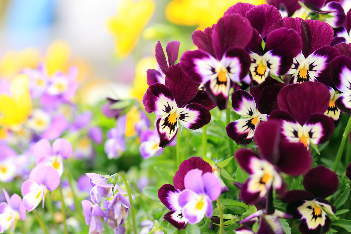 показать цветочки фото разделе именных стихах