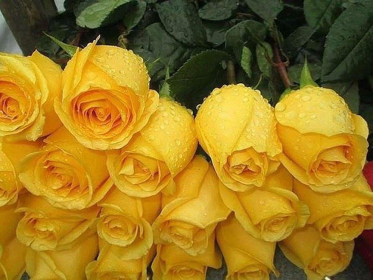 Говорящие розы картинки