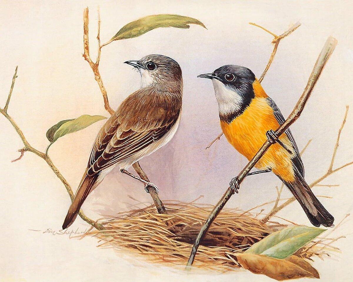 часто картинки с образом птиц визначення