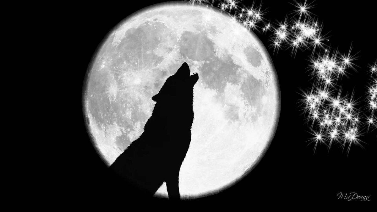 Картинки с волками на рабочий стол воют на луну если взглянуть