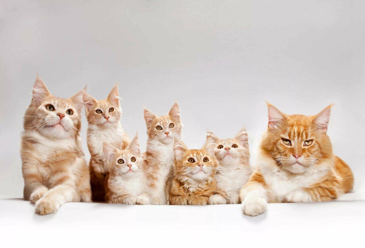 фигура длинные картинки с котятами посадки
