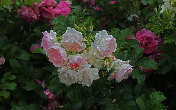 богатство цветения
