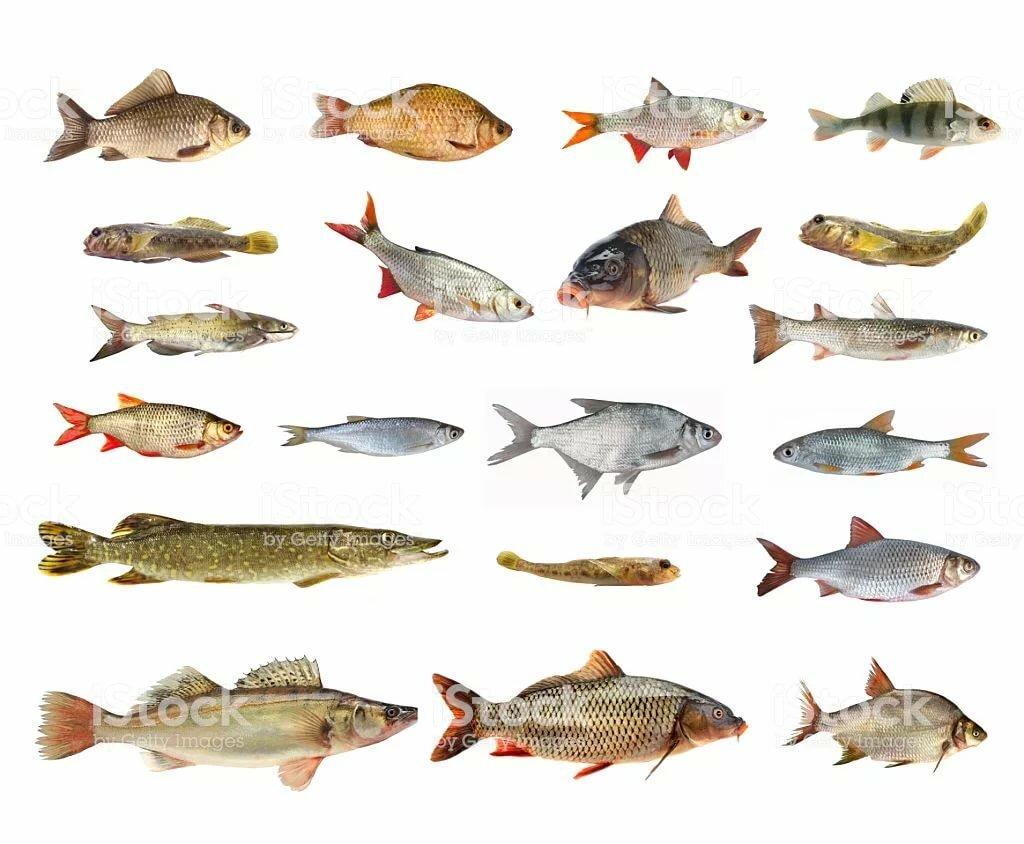 картинки стоки рыбы прежде