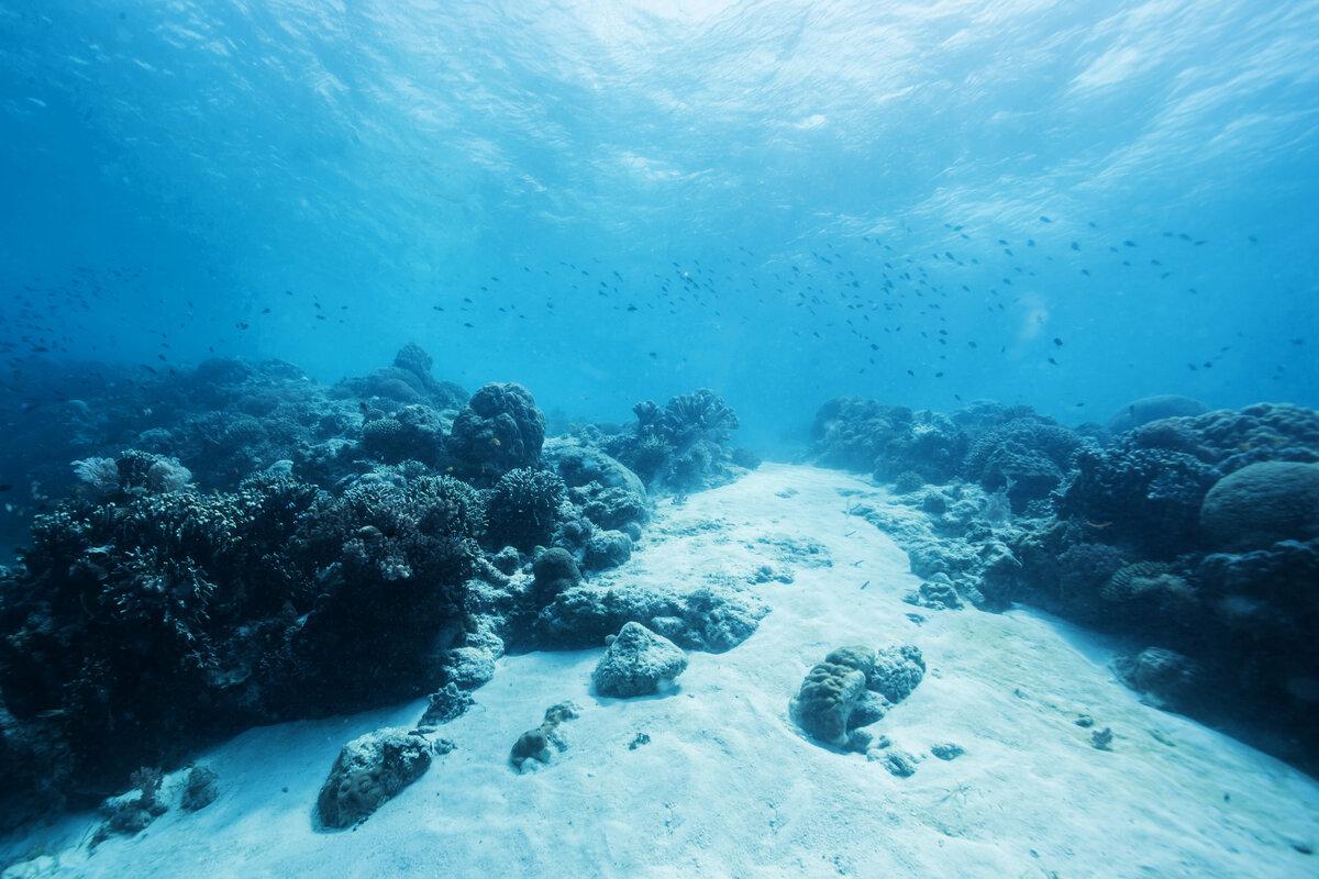 Картинки что находится под водой