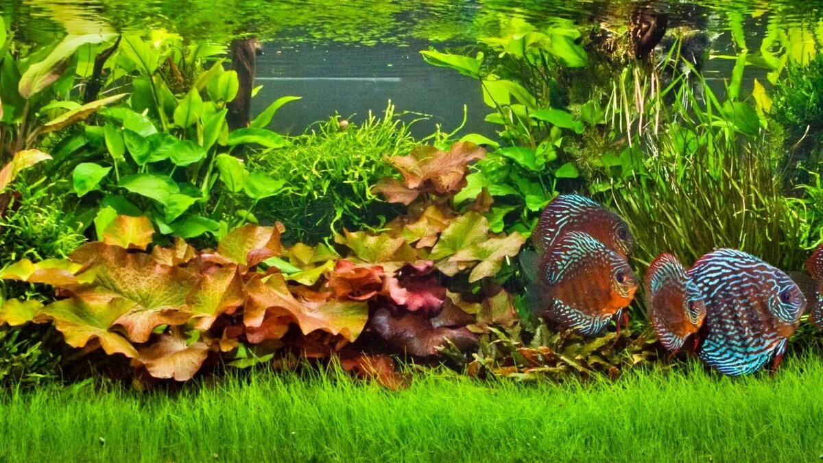 Картинки на рабочий стол аквариумные рыбки