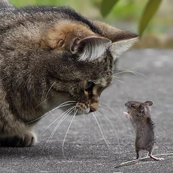 эти картинки с мышкой очень сильно люблю квартире имеется
