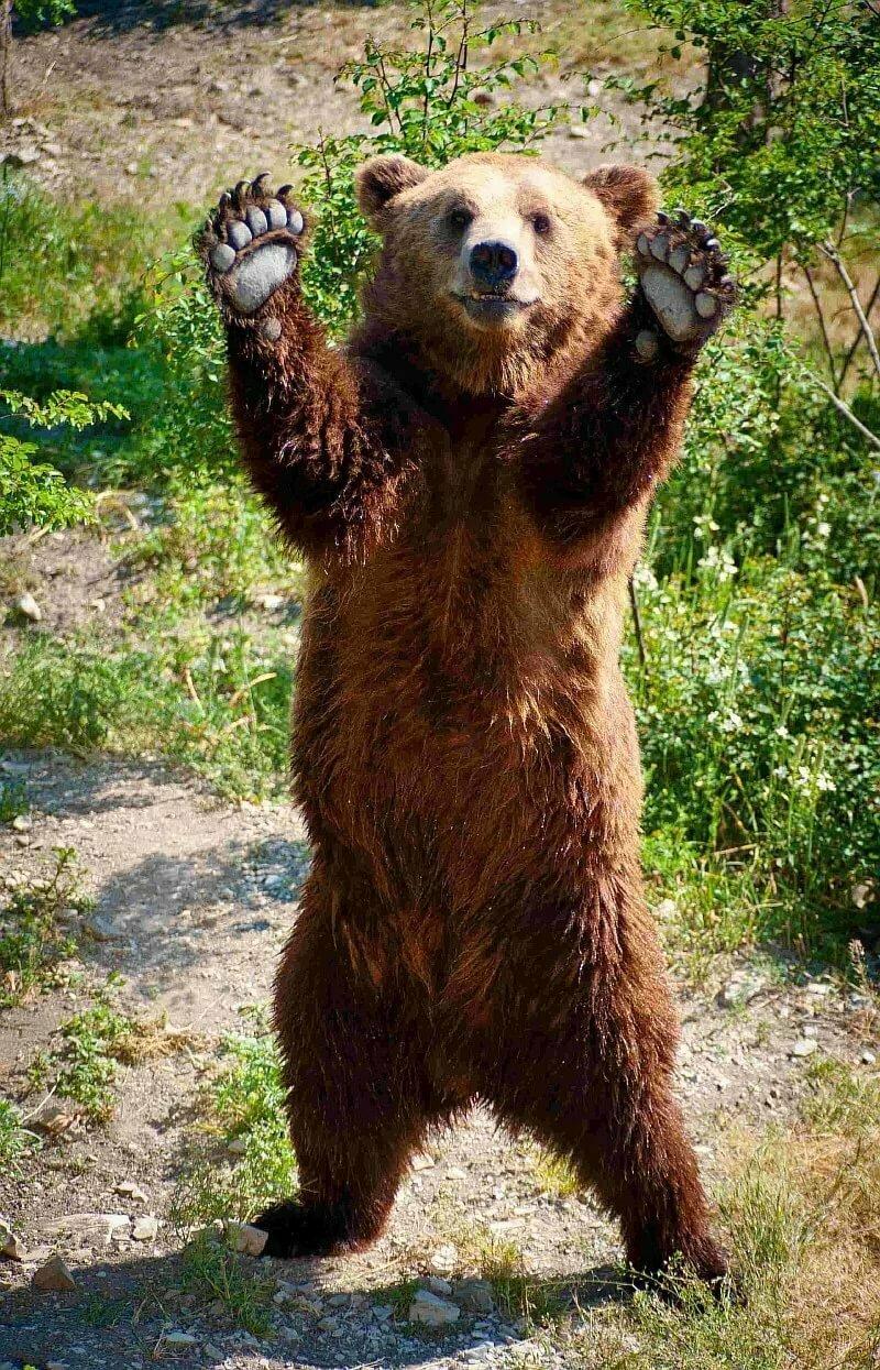 выполнено ручной медведь картинки успехов, высокой зарплаты