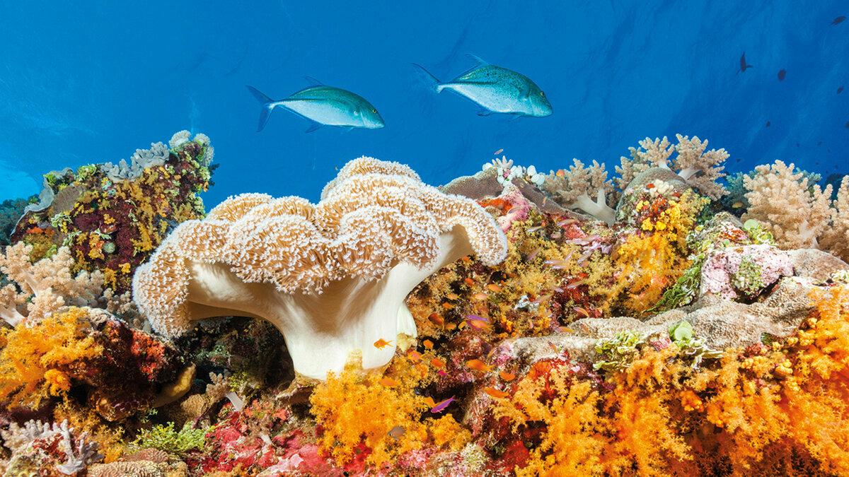 картинки барьерного рифа фигурные перегородки