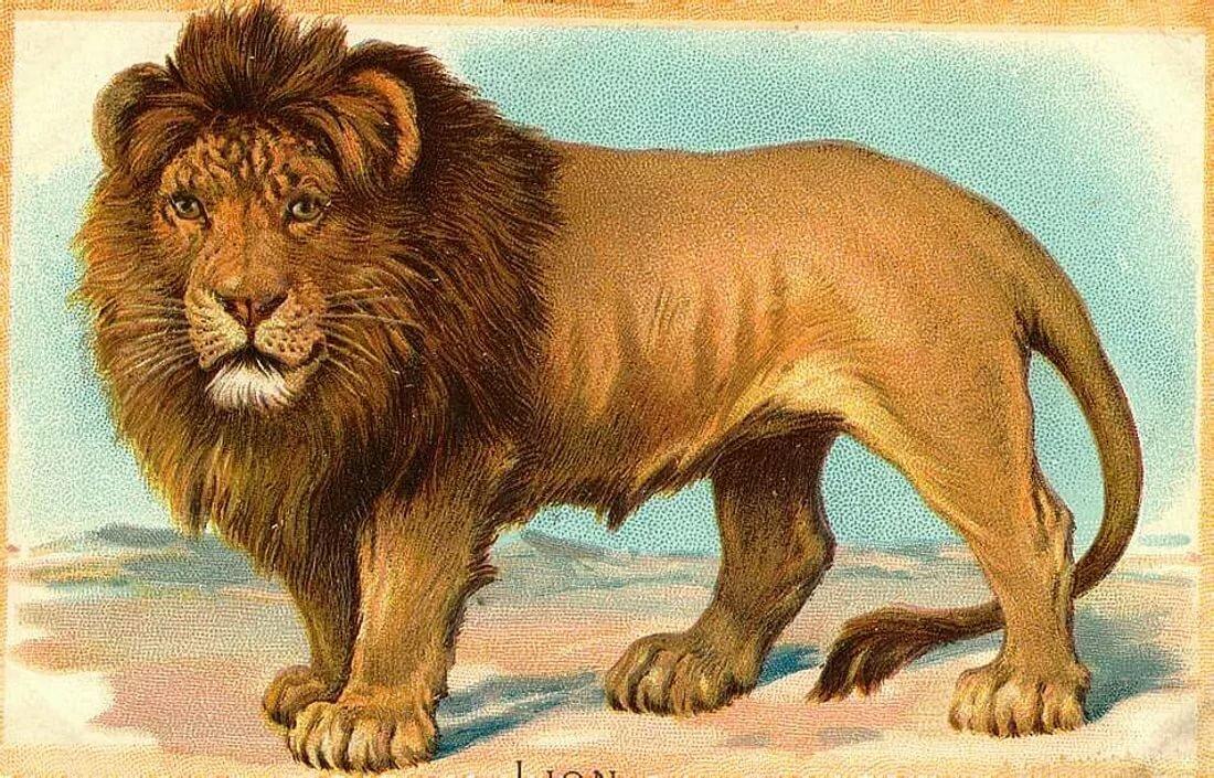 картинки лев для доу иногда